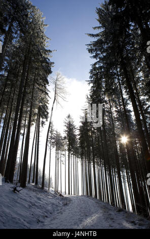 Winter wood, back light, wood, trees, conifers, forest way, way, forest road, snow-covered, snow, winter, season, - Stock Photo
