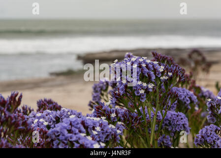 Purple Flowers Bloom As Waves Crash in the Distance in Pacific ocean - Stock Photo