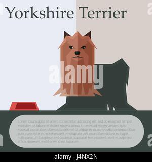 Yorkshire terrier colourful postcard - Stock Photo
