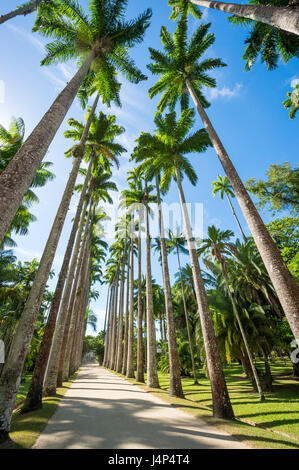 Dirt path lined with tall royal palm trees under bright blue sky in Rio de Janeiro, Brazil - Stock Photo