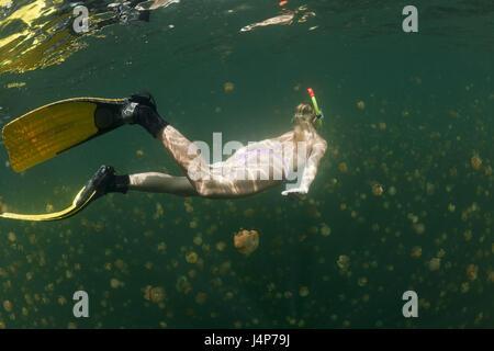 Underwater recording, Schnorchlerin, Mastigias-display screen jellyfishes, Mastigias Papua etpisonii, dream, swim, - Stock Photo