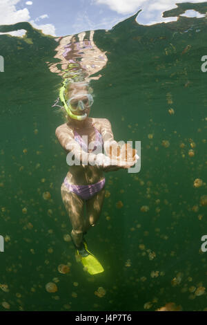 Underwater recording, Schnorchlerin, Mastigias-display screen jellyfishes, Mastigias Papua etpisonii, dream, touch, - Stock Photo