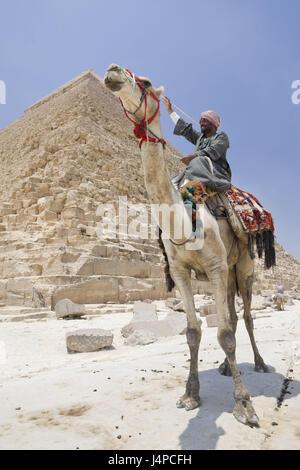 Camel driver before Chephren pyramid, Egypt, Cairo, - Stock Photo