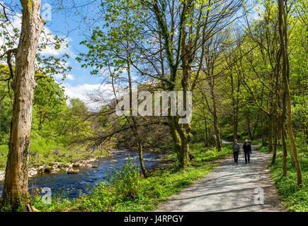 Walkers on Dales Way footpath by River Wharfe, Strid Wood, nr Bolton Abbey, Wharfedale, Yorkshire Dales National - Stock Photo