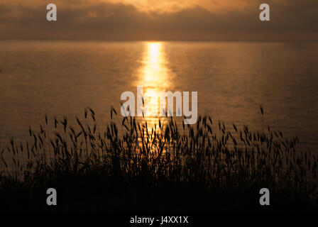 Beautiful sunset on the sea with grass and ears in the foreground - Stock Photo