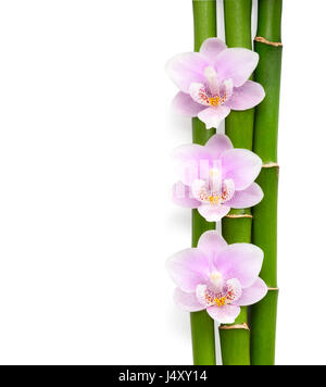 Three  pink orchids and branches of bamboo  lying on white.  Isolated  background. Viewed from above. - Stock Photo