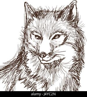 wolf wildlife animal image is hand drawn. portrait pencil sketch of wolf - Stock Photo