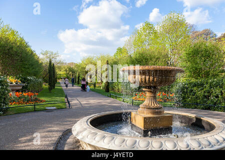 Fountain, trees and flowers in Spring at Avenue Gardens at Regents Park, London, England, UK - Stock Photo