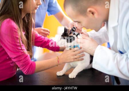 Young veterinarian at work checking cat's ear at vet ambulant - Stock Photo