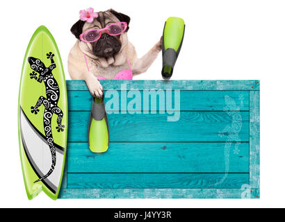 bikini babe pug dog with blue vintage wooden beach sign, surfboard and flippers for summer, isolated on white background - Stock Photo