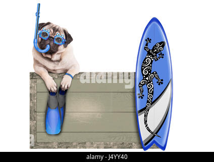 funny pug dog with blue vintage wooden beach sign, with goggles, snorkel, surfboard and flippers for summer, isolated - Stock Photo