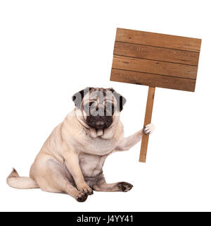 lovely cute pug puppy dog sitting down with blank wooden sign on pole, isolated on white background - Stock Photo
