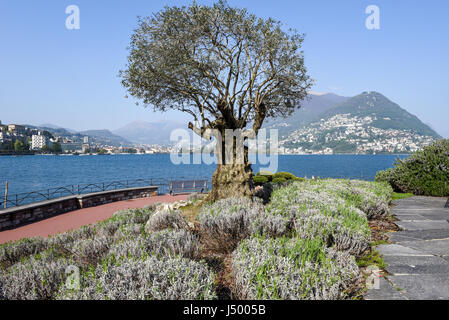 The lakefront of Lugano on the italian part of Switzerland - Stock Photo