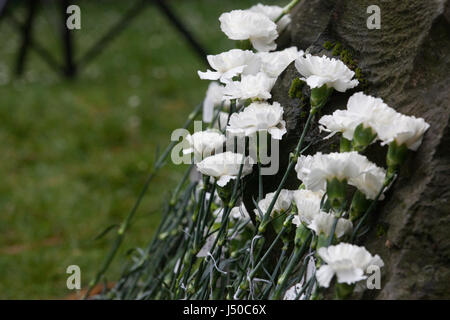 London, UK. 15th May, 2017. Flowers laid in front of the Conscientious Objectors' stone in Tavistock Square on Conscientious - Stock Photo