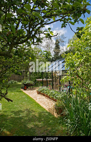 A plant-filled greenhouse in a domestic garden pictured on a sunny spring day in Oxfordshire, UK.