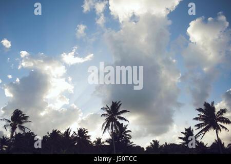 palm trees on beach in Tulum - Stock Photo