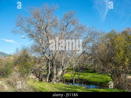 Riverside vegetation next to the Santillana Stream, in La Pedriza, Guadarrama Mountains National Park, Madrid, Spain - Stock Photo