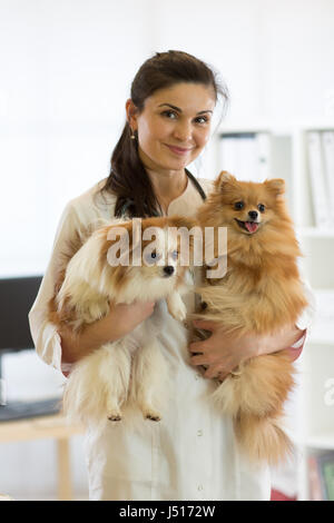Veterinarian with dogs in hands in clinic - Stock Photo