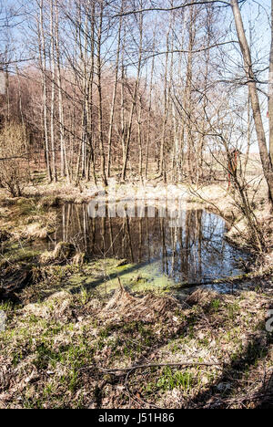 small lake with trees and clear sky reflected on its water ground durinh nice spring day near Vresina village only - Stock Photo