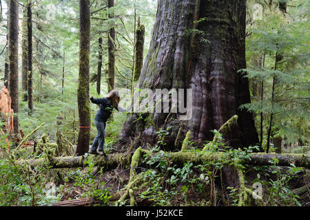 A woman balancing on a fallen log at the base of a giant western red cedar in an old growth forest on Vancouver - Stock Photo