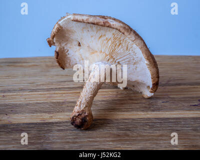 shiitakeLentinula edodes is an edible mushroom native to East Asia, - Stock Photo