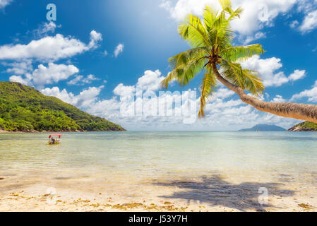 Palms on the beach under sea in sunny day - Stock Photo