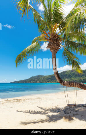 .Sandy beach with palm trees - Stock Photo