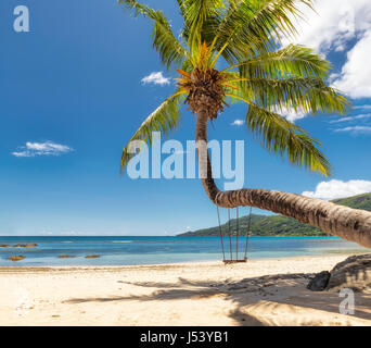Palm tree on tropical beach. - Stock Photo
