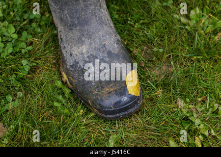 rubber shoe with leave on it in grass field - Stock Photo