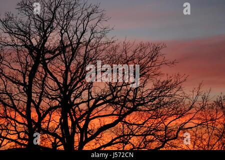 sunset in berlin 04 - Stock Photo
