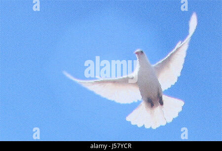 War Peace Pigeon Stock Photo 114780998 Alamy