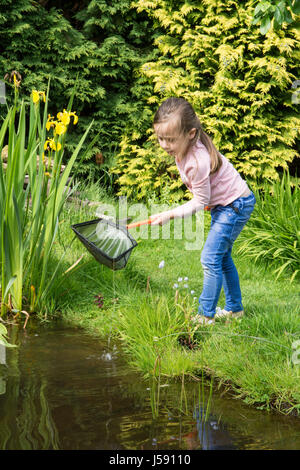 Four year old girl pond dipping, trying to catch tadpoles and other wildlife in a net, Garden wildlife pond. Sussex, - Stock Photo