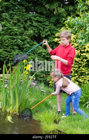 eleven year old boy and four years old girl pond dipping trying to catch tadpoles and other wildlife in a net in - Stock Photo