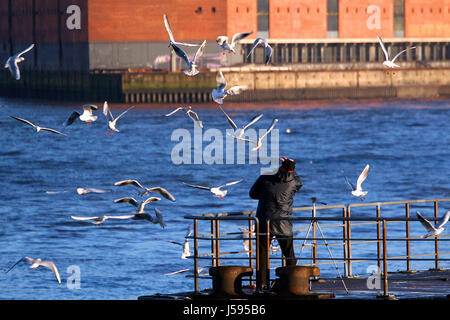 the birds - colleague in distress ... - Stock Photo