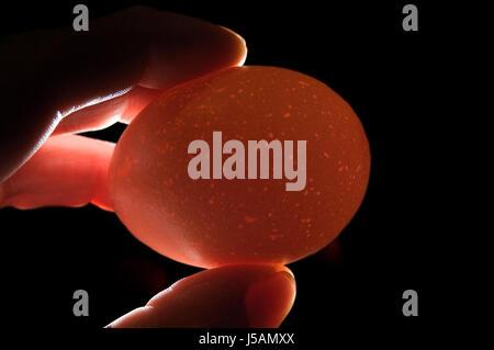 check eco egg yolk bowl chicken eggs lime fragile chicken breeding fried egg - Stock Photo