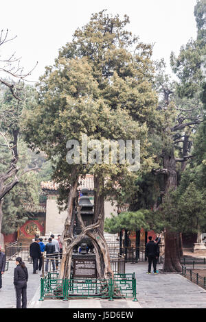 BEIJING, CHINA-26th MARCH 2014:The Forbidden City was once the home for the Emperor of china and his government, - Stock Photo