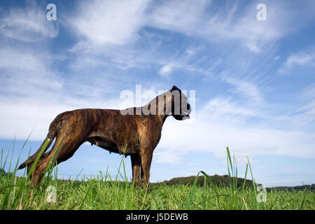 blue beautiful beauteously nice tree trees animal green brown brownish brunette - Stock Photo