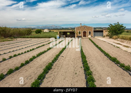 Growing crops in lines on a farm in north Mallorcan countryside, Majorca, Balearic Islands, Spain - Stock Photo