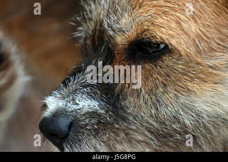 Close-up of dog profile - Stock Photo