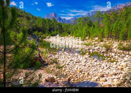 Pine trees in Col de Bavella mountains near Zonza town, Corsica island, France, Europe. - Stock Photo