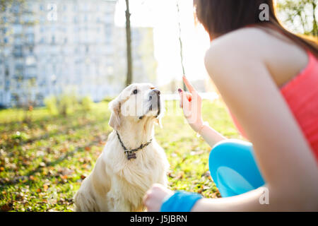 Girl training dog at park - Stock Photo