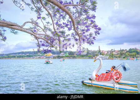 Dalat, Vietnam - March 27th, 2017: Visitors enjoy Jacaranda flowers bloom along Xuan Huong Lake in spring. This - Stock Photo