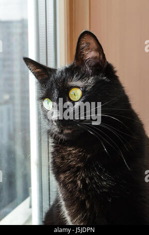 black cat sits on the sill and looking out the window - Stock Photo