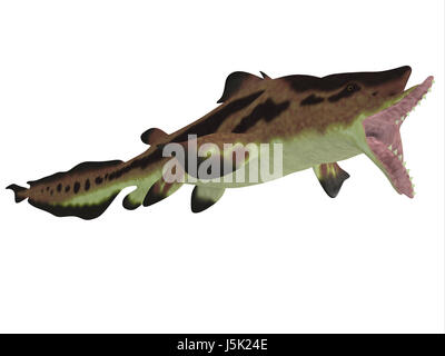 Edestus shark lived in seas of the Carboniferous Period in North America, England and Russia. - Stock Photo