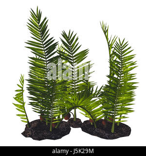 Nipa burtinii Plants - Nipa started out in the Cretaceous Period and live today in swamps, river borders and humid - Stock Photo