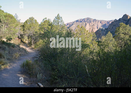 The lower portion of the Lost Mine Trail at Big Bend National Park winds through Pinyon Pine trees - Stock Photo