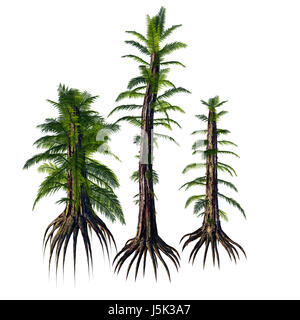 Tempskya is an extinct genus of tree-like fern that lived during the Cretaceous Period. - Stock Photo