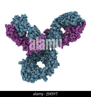 Pembrolizumab monoclonal antibody drug protein. Immune checkpoint inhibitor targetting PD-1, used in the treatment - Stock Photo