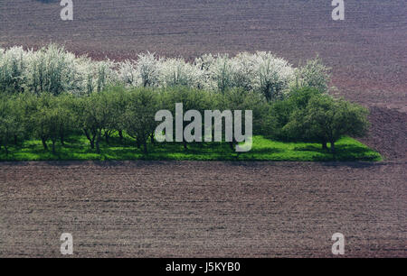 tree trees field blossoms spring fields oasis acre bleed meadow scenery - Stock Photo
