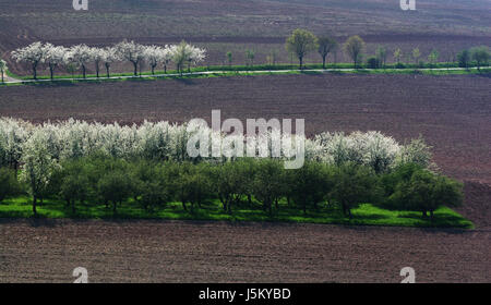 field fields oasis acre tree trees field blossoms spring fields oasis acre - Stock Photo